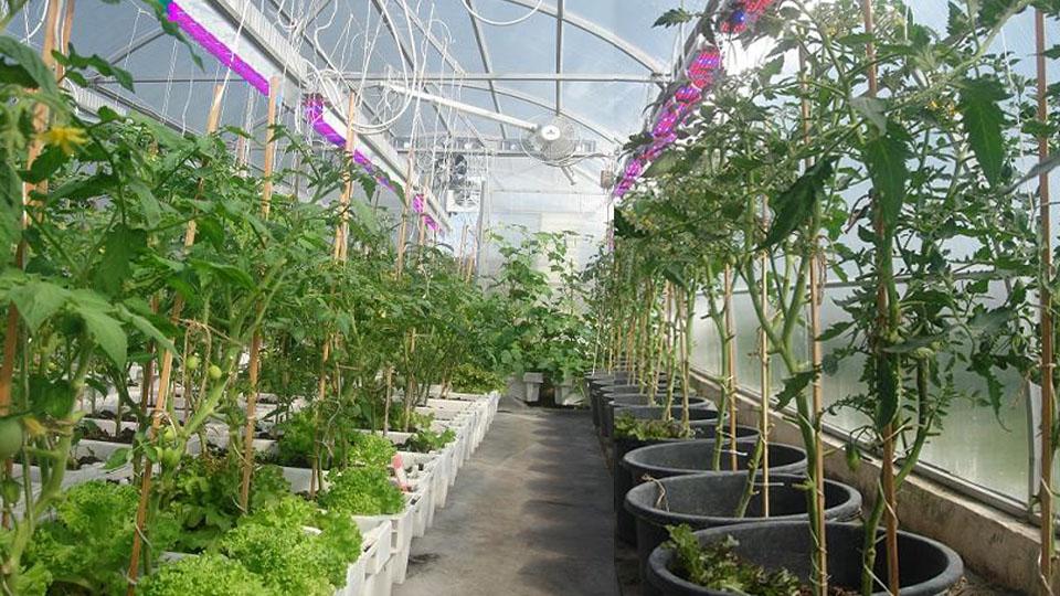 Бизнес идеи выращивание огурцов 32